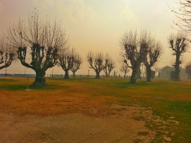 Barren apple orchards at Pahelgam