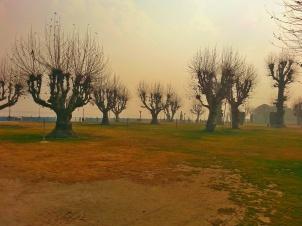 Barren apple orchards at Pahelgam